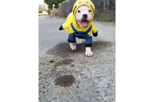 商談中の沖縄県のミックス犬の7枚目
