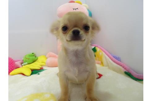 成約済の栃木県のミックス犬の1枚目