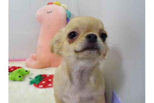 成約済の栃木県のミックス犬の3枚目