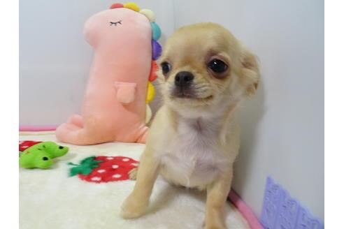 成約済の栃木県のミックス犬の2枚目