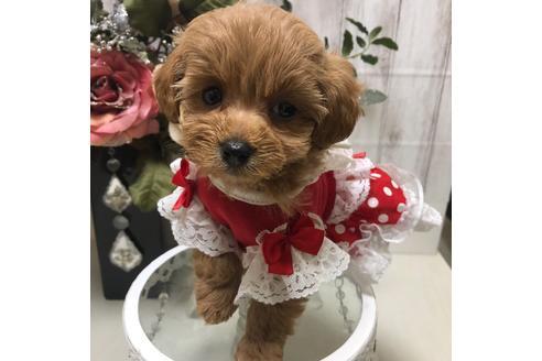 成約済の広島県のミックス犬の1枚目