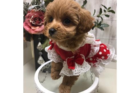 成約済の広島県のミックス犬の3枚目