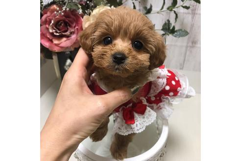 成約済の広島県のミックス犬の4枚目