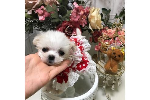 商談中の広島県のミックス犬の9枚目