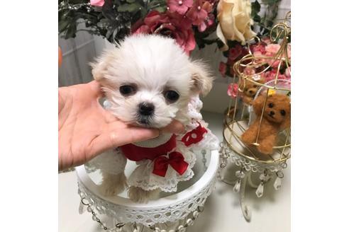 商談中の広島県のミックス犬の10枚目