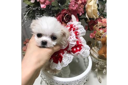 商談中の広島県のミックス犬の8枚目