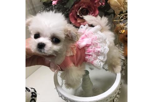 商談中の広島県のミックス犬の7枚目