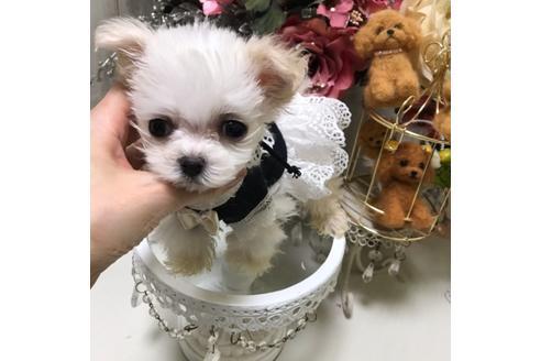 商談中の広島県のミックス犬の2枚目