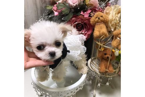 商談中の広島県のミックス犬の3枚目