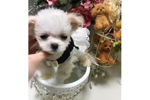 商談中の広島県のミックス犬の4枚目