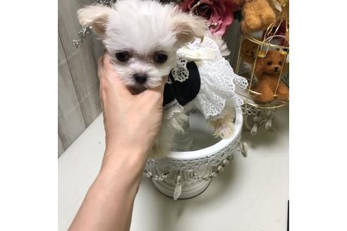 商談中の広島県のミックス犬の5枚目
