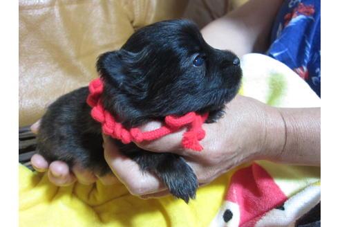 販売中の福岡県のミックス犬の1枚目