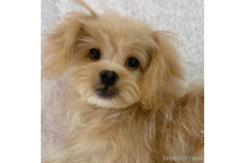 成約済の神奈川県のミックス犬-139122の1枚目