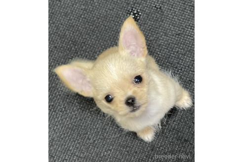 販売中の千葉県のミックス犬-151701の1枚目