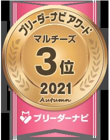 ブリーダーナビ アワード 2021 秋 人気犬種部門_マルチーズ 3位