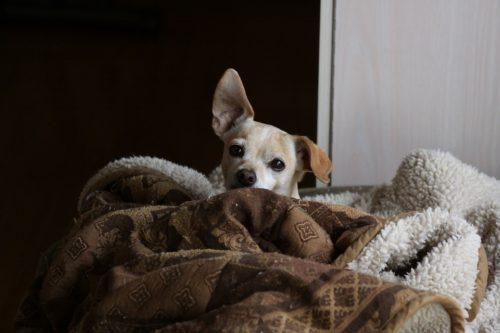 犬アレルギーってどんな症状 原因と対策 治療法はある