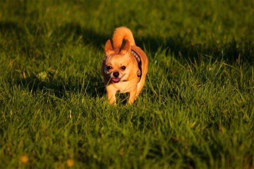 愛犬を睡眠不足から守るには?大切なのは運動とストレス管理