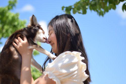 愛犬と遊びに行こう!ペット連れOK!夏におすすめのスポット~関東編~