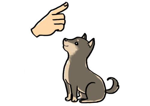 子犬を迎える前にこれだけはやっておきたい!必要な準備や費用を紹介