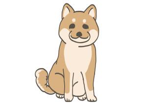 信州柴犬-