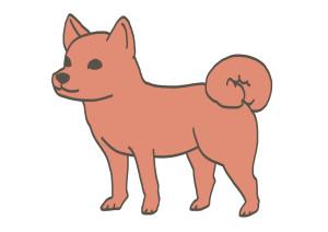 美濃柴犬-