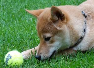 dog-2074376_1920