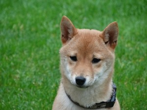 dog-2074619_640