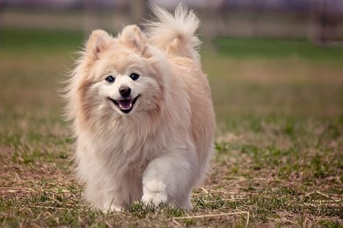 愛犬の肉球が乾燥していませんか?予防に最適なケア方法をご紹介!