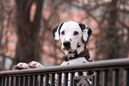 犬カフェに行ってみたい!東京でおすすめの犬カフェ5選をご紹介