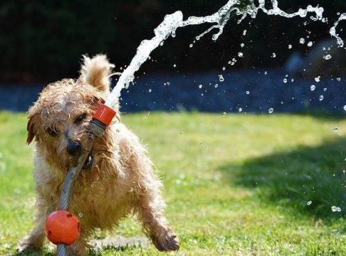 夏の暑さは要注意!ワンちゃんに暑さ対策をして熱中症を防ごう!