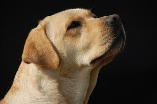 盲導犬を見かけたときの接し方は?知っておきたいルールとできること