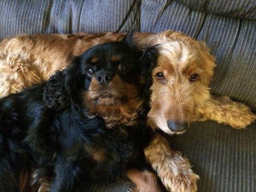 愛犬とお出かけ!おすすめの全国のワンちゃんイベントをご紹介