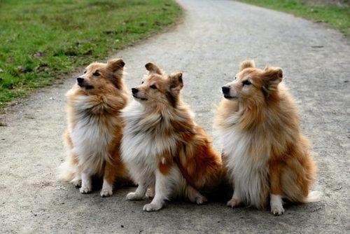 これがあれば迷子時も安心?飼い主と愛犬を結ぶマイクロチップ