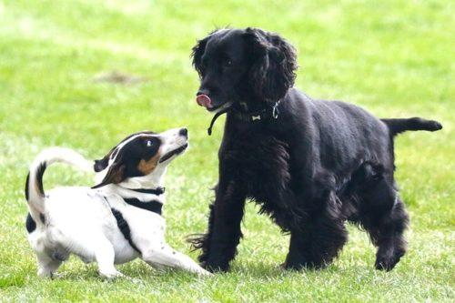 名前は短くシンプルに 愛犬のネーミングポイントを詳しくご紹介