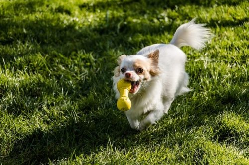 名前は短くシンプルに!覚えやすい犬の名前とは?