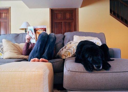 ワンちゃんを飼えるペット可賃貸の探し方!暮らすときの注意点も解説