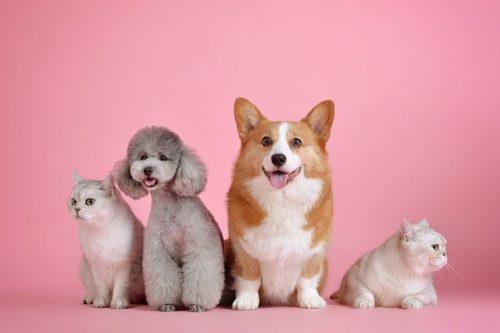 ワンちゃんの値段が高い・安い理由って?代表的な犬種の相場もご紹介
