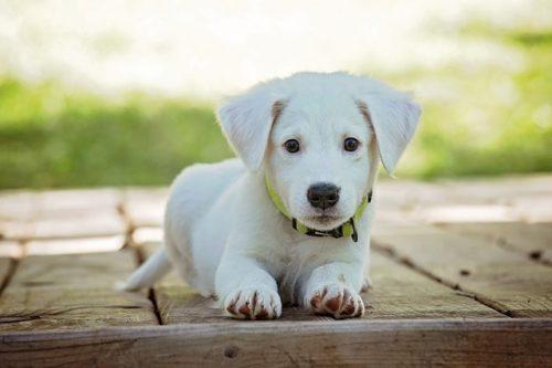 愛犬が迷子になったらどうすればいい?探し方や迷子防止をご紹介