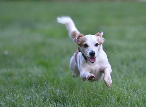 キャンプを愛犬と楽しみたい!必要な持ち物や注意点をご紹介!