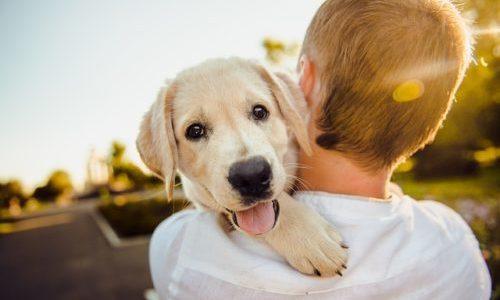 初対面でも犬に好かれる人はこんな人!犬に好かれる撫で方なども解説