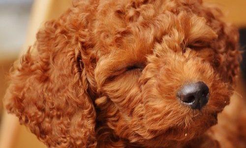 初心者向け!犬のブリーダーを利用するためのメリット・注意点・値段
