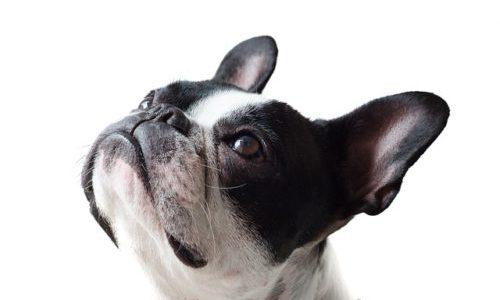 愛犬のお世話を便利にする!スマート首輪などのIoTグッズを紹介