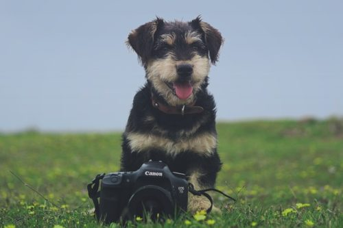 犬とカメラ