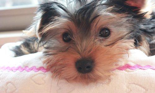 飼い犬を対象にした助成金!避妊・去勢手術費を一部補助してくれる?