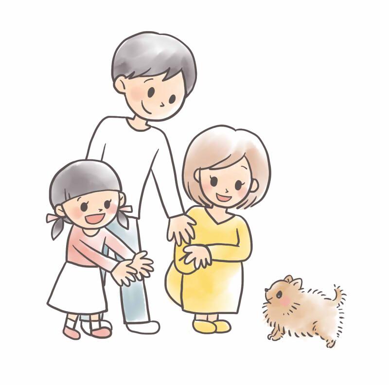 ポメラニアンを迎える準備と飼い始めにするべきことをまとめてご紹介