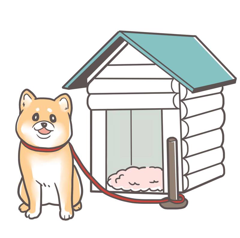 【柴犬の外飼い】室内飼いとの違いは?トイレなどのしつけは必要?