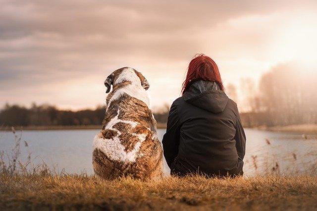 犬の寿命ってどのくらい?犬種ごとの平均寿命やギネスの最高齢