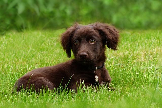 【飼い主様の声】ミックス犬を飼ってよかったことは?