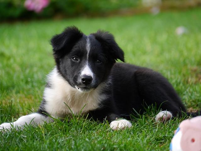 犬の知能は何歳?賢い犬種とは?