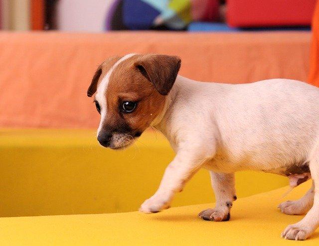 【飼い主様の声】ミックス犬を飼うときに気を付けたほうがいいこと!